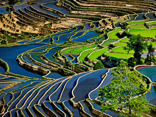 yuanyang terrace agriculture